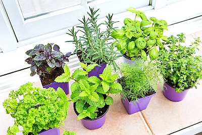 herb-garden-kitchen-400x267